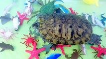 Animaux bébés enfants enfants Apprendre apprentissage des noms océan animal de compagnie Mer les tout-petits tortue eau anim