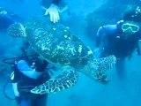 Plongée sous marine avec une tortue