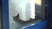 Sıcaktan Bunalan Kedi Marketin Kapısını Mesken Tuttu