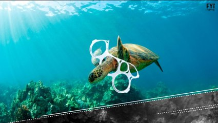 De quem é a culpa pela destruição dos oceanos?