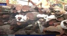4 Crores Worth RedWood Seized in Ramanathapuram-Oneindia Tamil