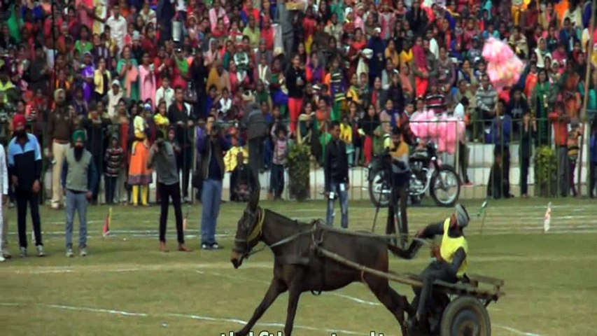 Horse cart racing - Kila Raipur, Punjab