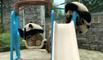 Des bébés pandas s'amusent à jouer au basket sur une aire de jeux pour enfants