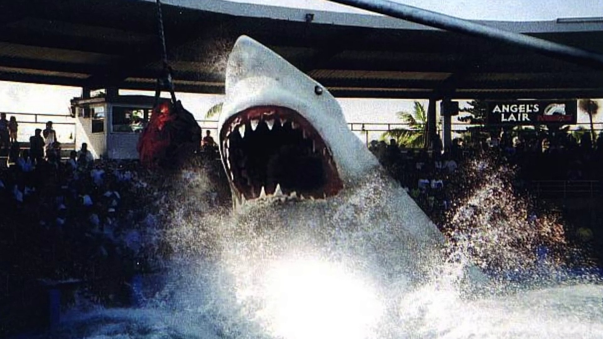 MEGALODON RISES - SHARK WEEK - Discovery Channel Sharks Animals Nature