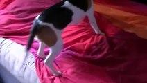 Beagle reencontra o seu dono após quase 3 meses e o momento foi lindo by Tá Bonito - Dailymotion