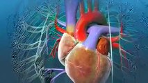 What is the procedure of Heart Valve Replacement