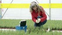 Santé des végétaux : le xylella fastidiosa