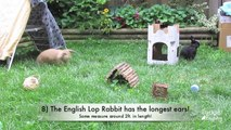 BudgetBunny: 20 Fun Fs About Rabbits new 04 Altex Rabbits The Altex is a commercial si