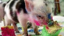 Et animaux escroquerie avec photos des sons Images et sons animaux de