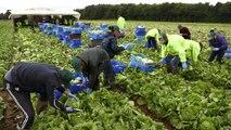 Britische Regierung gibt Studie über Zuwanderung in Auftrag