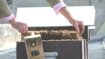 Apiculture : les ruches envahissent les toits de Paris