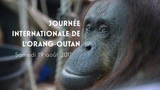Journée internationale de l'Orang-Outan