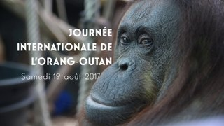 Journée internationale de l'Orang-Outan