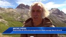 Hautes-Alpes : un aigle royal relâché au col du Galibier