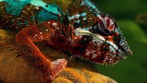 ANIMALS HIDDEN DEEP IN THE JUNGLE - Discovery Nature Wildlife Documentaries (full documentary)