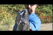 Élevage plus gros mieux Poisson-chat dans votre étang