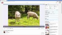 Comment à réduire tranche et modifier votre vidéos