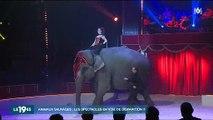Faut-il interdire les spectacles avec des animaux sauvages ? Les défenseurs des animaux haussent le ton - Regardez