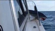 Un énorme requin en colère saute sur un bateau de pêche