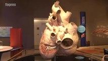 Le plus gros coeur du monde exposé à Toronto