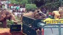 Un éléphant en aide un autre à monter dans un camion en Inde !