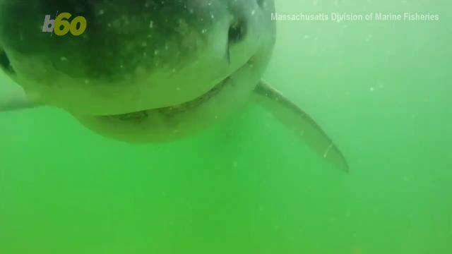 Terrifying Video When a Great White Shark Tries to Bite a Camera
