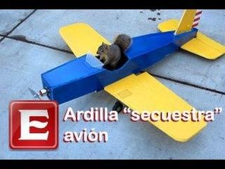 Ardilla 'secuestra' avión y emprende el vuelo
