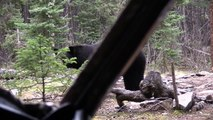 Hunting Big Saskatchewan Black Bears From The Ground