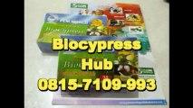 0815-7109-993 | Jual BioCypress Surabaya, Pengobatan Penyakit Asam Urat Surabaya