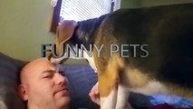 Pets Waking Up Their Owners (Part 1) ⏰ Pets As Alarm [Funny Pets]