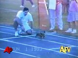 America's Funniest Home Videos Animal Clips
