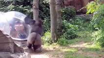 Zoo Animals Attacks ★ Zoo Animals Getting Angry! [Funny Pets]