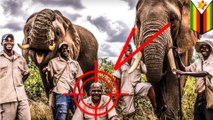 Elephant tramples handler who used stick to force him to give rides