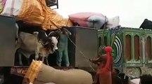 Qurbani animals offloading at Sohrab Goth Cow Mandi 2017