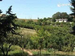 Icaro Tv. Pallini dentro casa: i residenti della Camilluccia chiedono il divieto di caccia