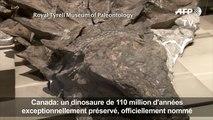 Des scientifiques révèlent l'histoire d'un dinosaure canadien