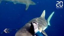 Il se fait attaquer par 2 requins ! - Le Rewind du vendredi 4 août 2017
