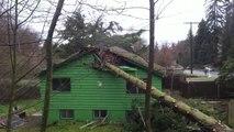 BRAVO les bûcherons... une maison détruite par un tronc d'arbre abattu de travers...