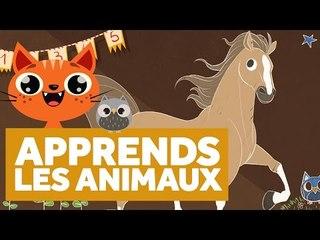 Apprendre Les Animaux - L'École des Zibous ! Vidéo Educative