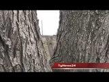 Tg 12 Marzo: Leccenews24 politica, cronaca, sport, l'informazione 24 ore.