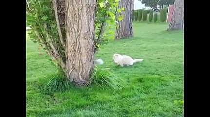 CUTE & AWESOME CATS  8