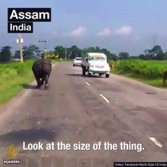Un Rhinoceros seme la pagaille parmis les voitures