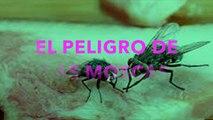 Qué pasa cuándo una mosca se posa en tu comida,(Rápido, esto debes hacer, fácil, tirar la comida)