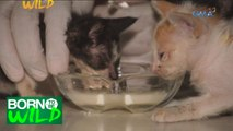 Born to Be Wild: Doc Nielsen rescues three stray kittens