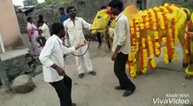 DANCE WITH THE COW || SEE NOW |||| GET ENJOY || PLEASE SEE NOW ||
