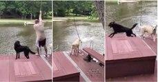 Cães correm para salvar o seu dono que simula estar em apuros na água