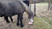 Pauvre cheval ! Il se fait voler son jouet par un chien