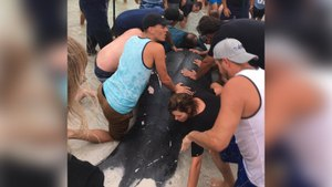 Beachgoers Come Together To Rescue Stranded Manatees