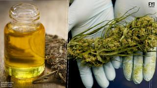 Cannabis Oil; The New Hope for Parkinson's