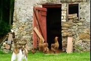 Adopté et chat des couples canetons épisode chatons impair sur Aperçu Cuddles animal 1 bbc